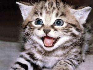 kitten-kittens-
