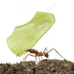 ant and leaf - Copy