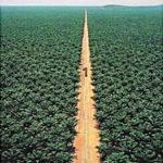 World's Largest Date Palm Garden