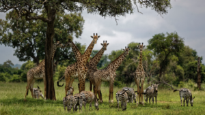 Humanity destroyed 83 percent  wild animals: study reveals
