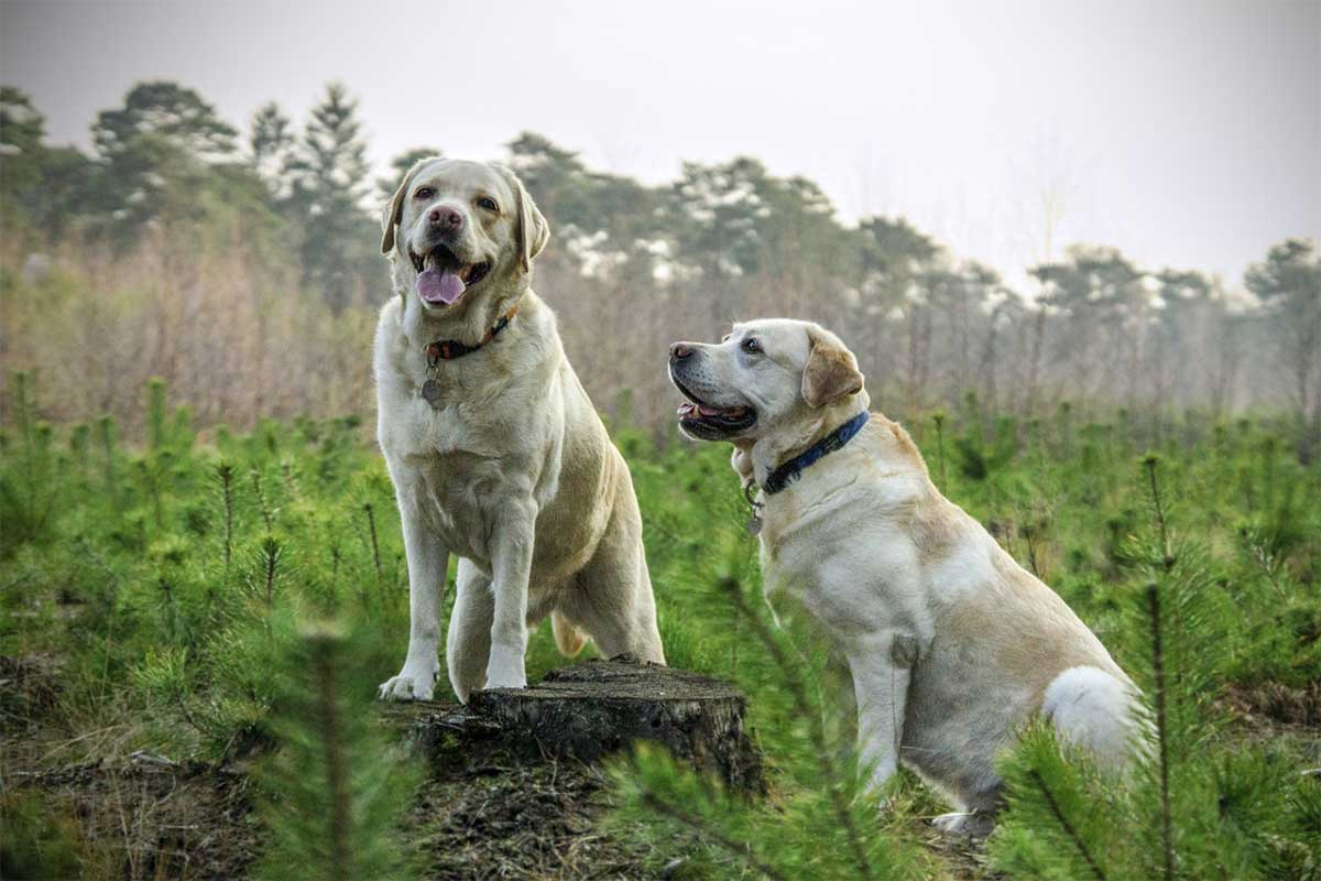 How To Win Clients And Influence Markets with DOGS