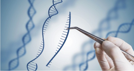 Genetic Engineering:  An Islamic Perspective