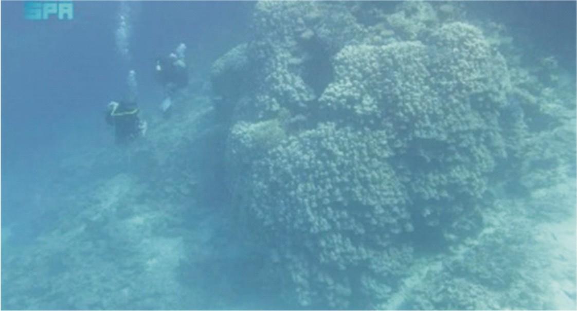 Massive coral colony discovered on  Saudi Arabi's Al-Waqadi Island